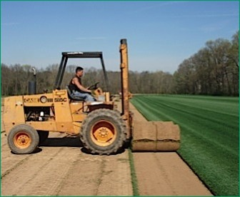 Turf Grass & Sod: Sales and Service for Contractors
